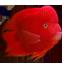 观赏鱼仓库